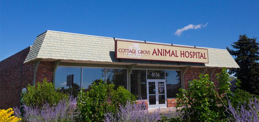 our cottage grove mn veterinary hospital location rh cottagegroveanimalhospital com  park grove pet hospital cottage grove